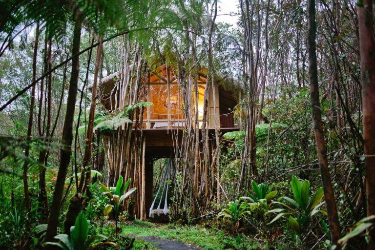 dreamy tropical tree house 768x512 1