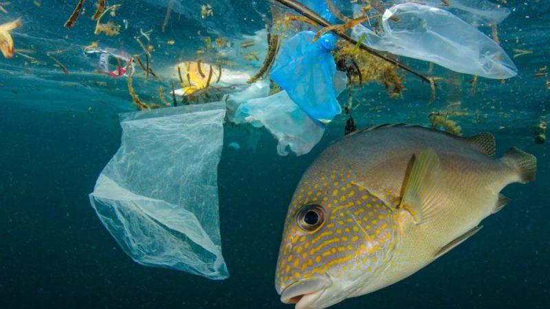 Пластиковые отходы: Не достаточно очистить океан!