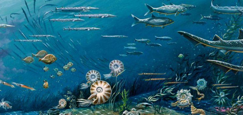 Биологическое разнообразие океана не увеличивается в течение миллионов лет