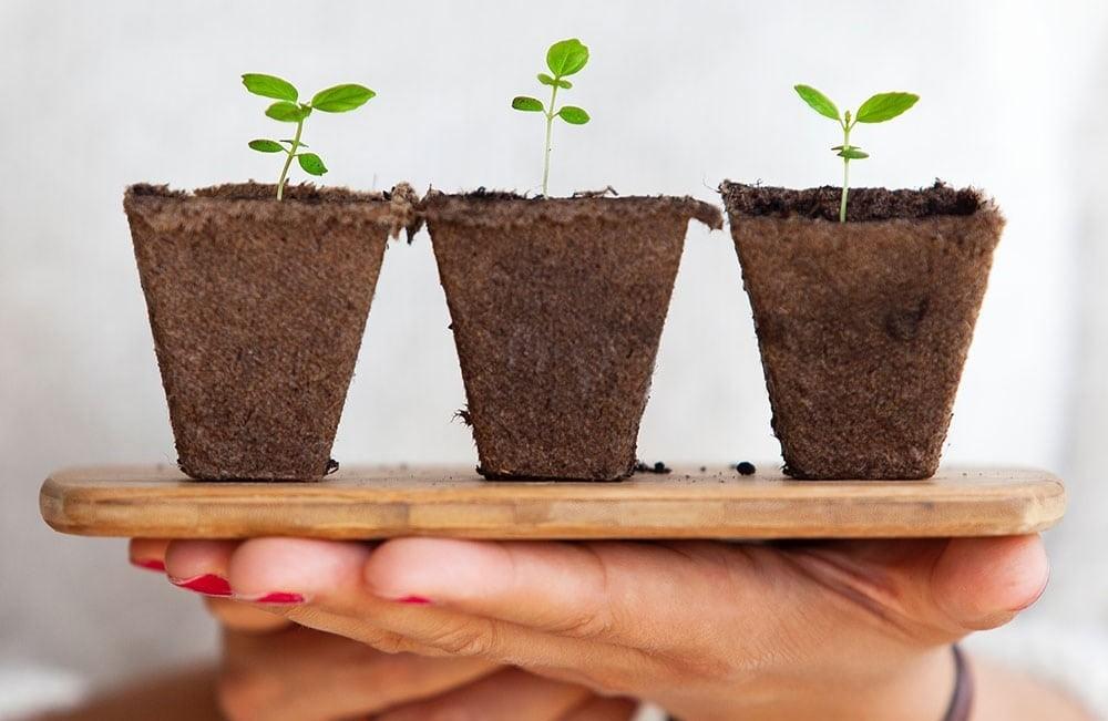 """Дикальцийфосфат используют как """"питание"""" для растений"""
