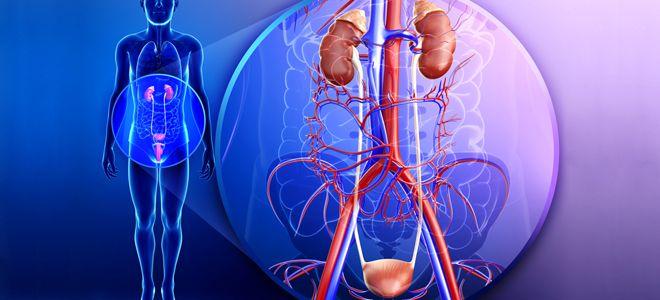 инфекции мочевыводящих путей (ИМП)