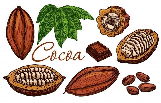 jekstrakt kakao 4
