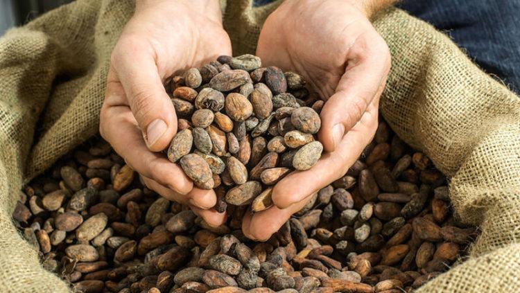 Побочные эффекты и дозировка экстракта какао