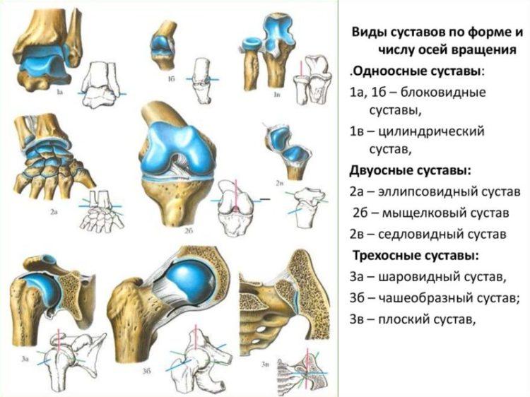 коллагеновый протеин для сустав
