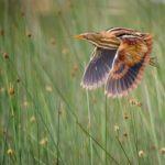 Орнитополис: Международный день птиц