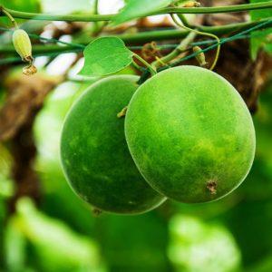 Архат (плод монаха): преимущества, побочные эффекты и дозировка