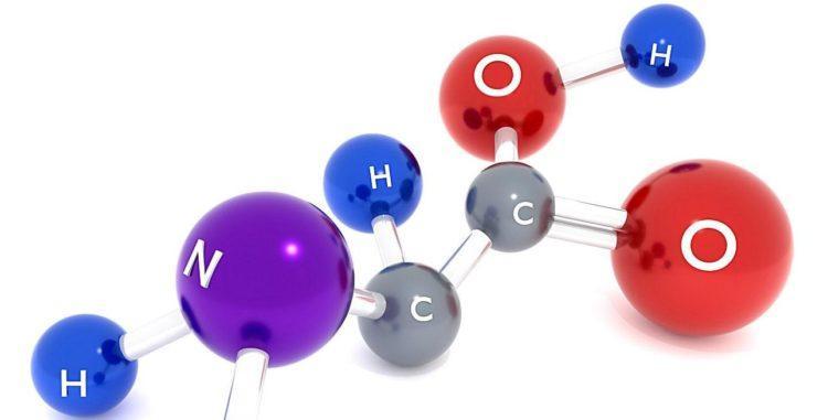 незаменимые аминокислоты их роль в организме человека