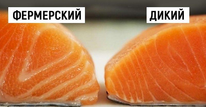 какой вид лосося полезен?