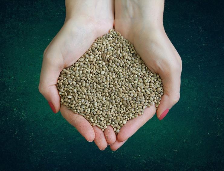 конопля посевная (семена)
