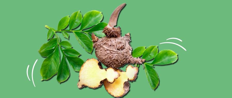 Глюкоманнан (корень конжака): преимущества, побочные эффекты и дозировка