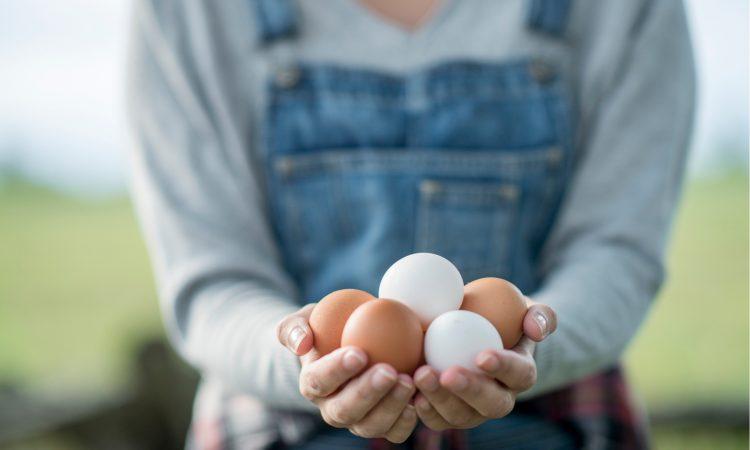 полезно ли есть сырые яйца